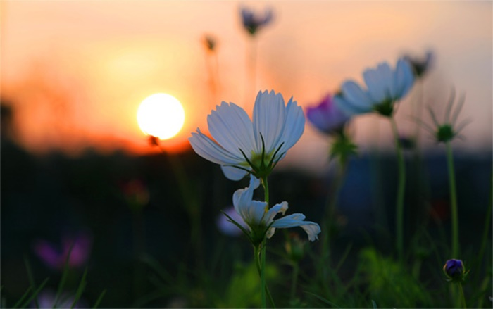 【景点推荐】湖南松雅湖国家湿地公园-湿地风光