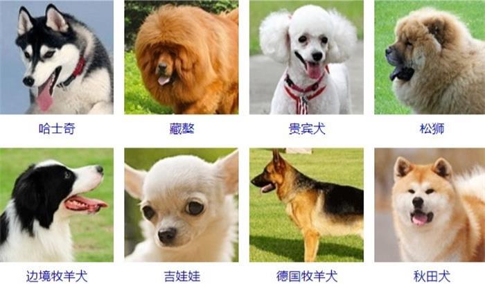 星沙哪里可以宠物狗寄养?费用怎么算?